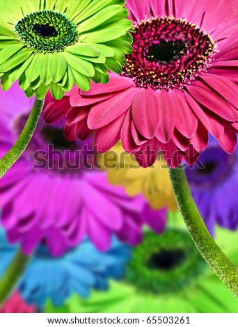 Abstract background of colorful gerbera daisies - stock photo