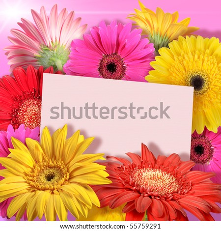 Abstract background of flowers. Greeting card. Close-up. Studio photography. - stock photo