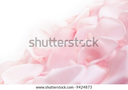 Abstract background of fresh pink rose petals - stock photo