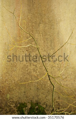 abstract background of leafless tree against wall - stock photo