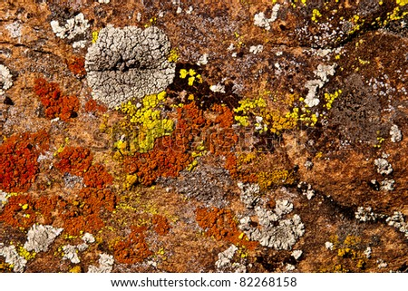 abstract background of lichen on red rock utah - stock photo