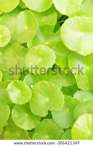 Abstract background of Natural green