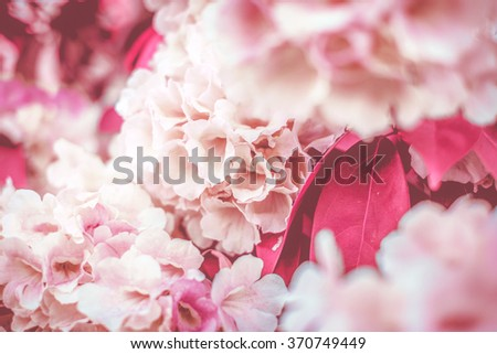 Abstract background of pink flowers. Close-up.