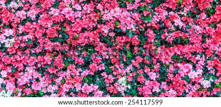 Abstract background of    red flowers - stock photo