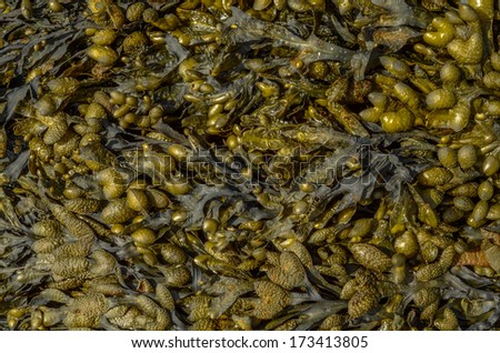 Abstract Background Of Seaweed On A Beach - stock photo