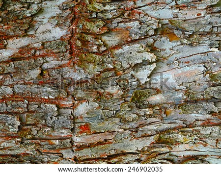 abstract background or texture cartoon draw bark - stock photo