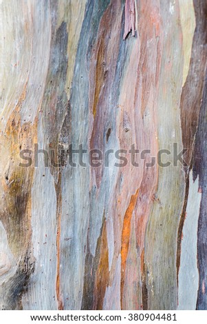 Abstract background pattern of Colorful  Eucalyptus deglupta tree bark - stock photo