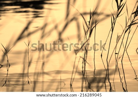 Abstract background: silhouettes of plant (reed, rush, cane)  bush closeup forming a geometric partially blurred pattern with wavy water surface as a backdrop . Can be used as a wallpaper.