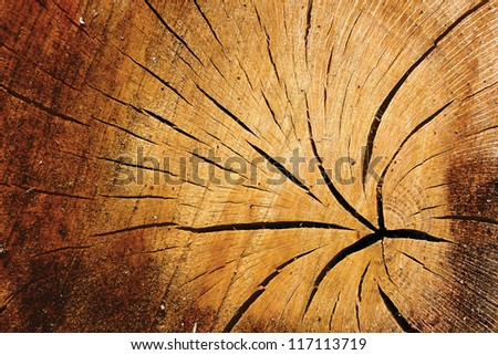 Abstract background texture and pattern of old cracked timber with radiating crack