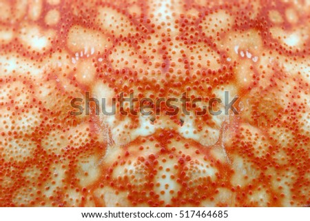 Shell Texture Stock Images Royalty Free Images Amp Vectors