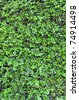 Abstract Background Texture Of A Lush Green Hedge - stock photo