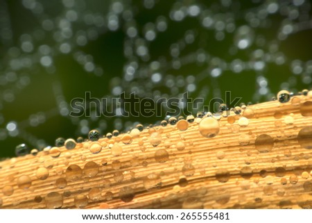 Abstract background. The spider web with dew drops.  - stock photo