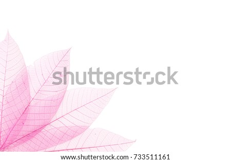 Abstract background - Transparent pink leaves  as border isolated on white