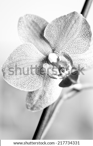Abstract background with orchid - stock photo