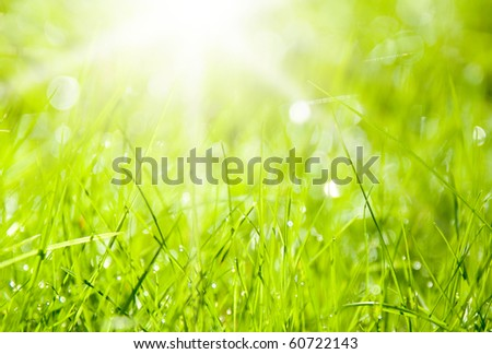Abstract background with sun and green grass - stock photo