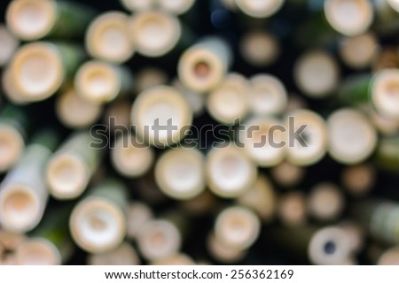 Abstract bamboo bokeh , blur background - stock photo