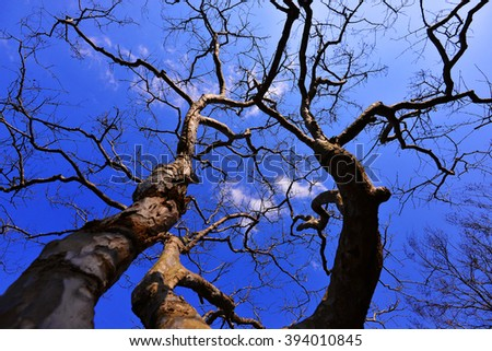 abstract bare trees branches canopy artistic autumn fallen leaves effect background - stock photo