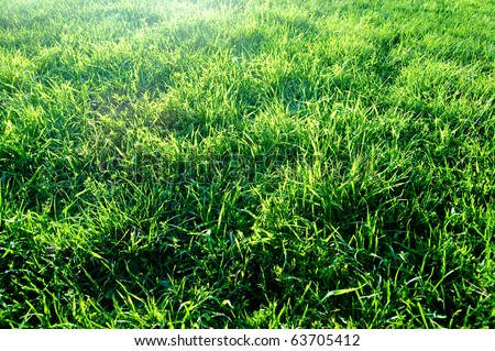 abstract  beautiful grass background - stock photo
