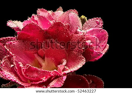 abstract beautiful underwater red freesia - stock photo