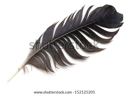 abstract bird feather on white background - stock photo