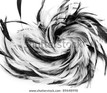 abstract black and white feathers - stock photo