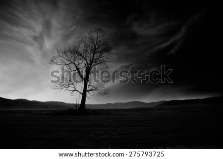 "abstract black and white high contrasted ""low key"" horror landscape with alone spooky tree"
