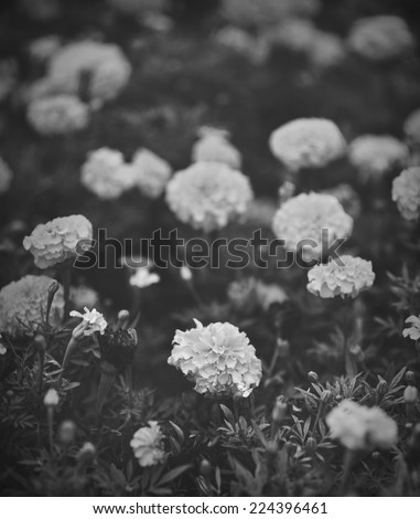 Abstract black and white of unknown flower - stock photo