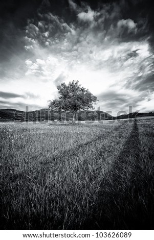 abstract black and white spooky tree with high contrasted dramatic sky - stock photo