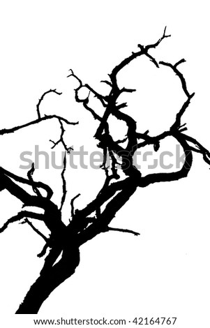 abstract black branches isolated on white - stock photo