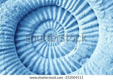 Abstract blue made from Ammonite prehistoric fossil on the surface - stock photo