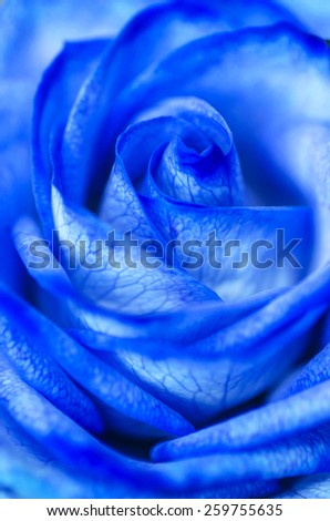 Abstract Blue Rose - stock photo