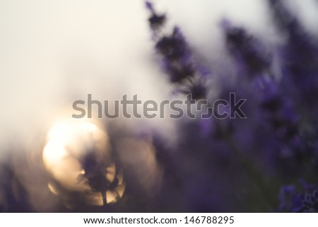 Abstract blur beautiful differential focus technique giving shallow depth of field blurred bokeh sun effect in lavender landscape - stock photo