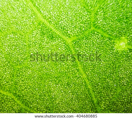 Chlorophyll Stock Images, Royalty-Free Images & Vectors ...
