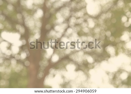 Abstract blur tree trunk and leaves as background abstract with out of focus  - stock photo
