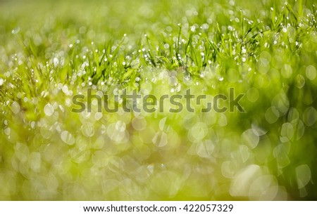 Abstract Blurred background from a wet green grass in dew drops - stock photo
