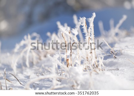 Abstract blurred frosty meadow grass covered with frost and snow. Lovely sunny winter season meadow details. Selective focus used.  - stock photo
