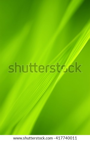Abstract blurred Grass background. - stock photo