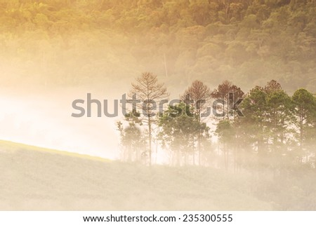Abstract blurry and soft background of misty forest in morning - stock photo