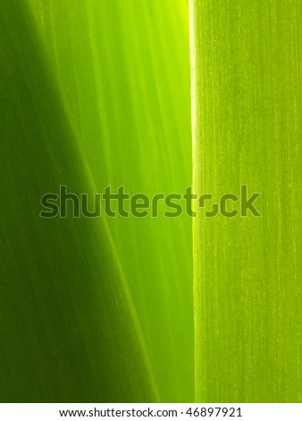 Abstract blurry background in green tones - stock photo
