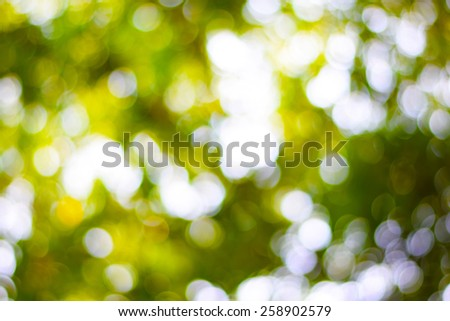 abstract bokeh and lens flare pattern on natural green blurred background