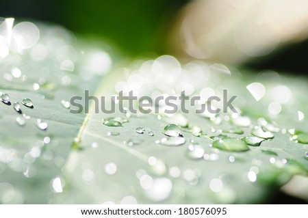 Abstract bokeh Light natural color background