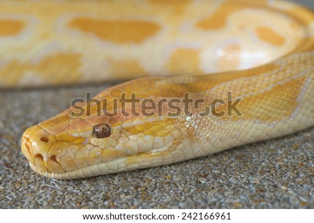 Abstract closeup of Gold python head background - stock photo