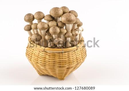 Abstract clump of Brown beech mushrooms ( Buna Shimeji) - stock photo