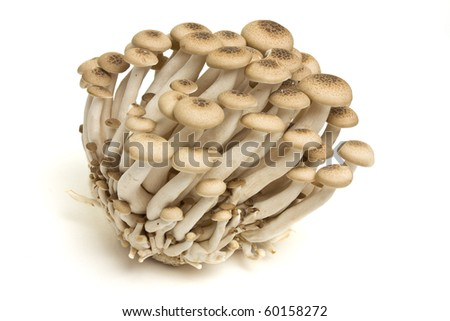 Abstract clump of Brown beech mushrooms ( Buna Shimeji) isolated on white.