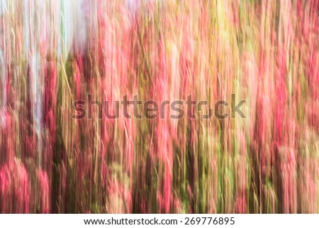 Abstract colorful blur background with green red pink coral texture  Artistic conceptual creative style. Blurred image for minimalist, puristic design effect, organic vertical lines pattern - stock photo