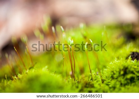 Abstract, colorful composition with blurred moss flowers in spring - stock photo