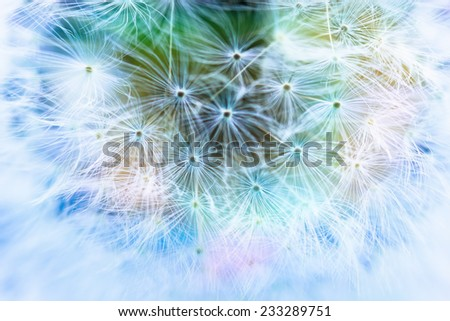 Abstract colorful dandelion macro background - stock photo