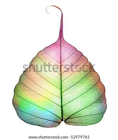 Abstract colorful Leaf isolated on white - stock photo