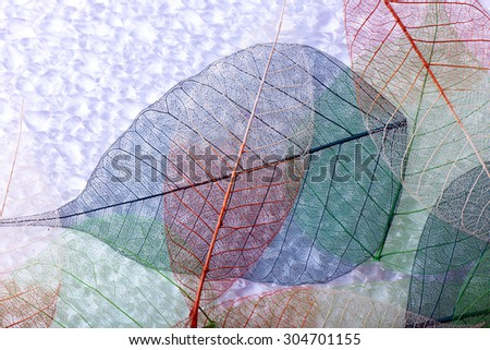 Abstract colorful skeleton leaves background - stock photo
