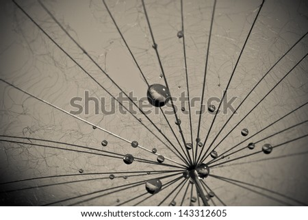 Abstract dandelion flower background, extreme closeup. Big dandelion. - stock photo